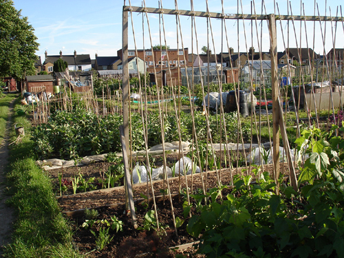 Barton Way Allotments.