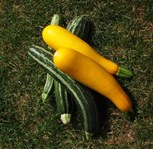 Green and yellow marrows