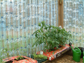 Inside the Bottle Greenhouse